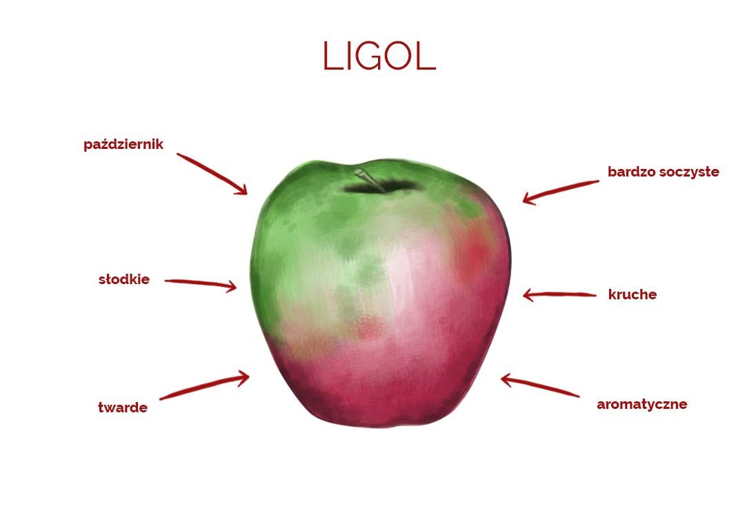 ligol