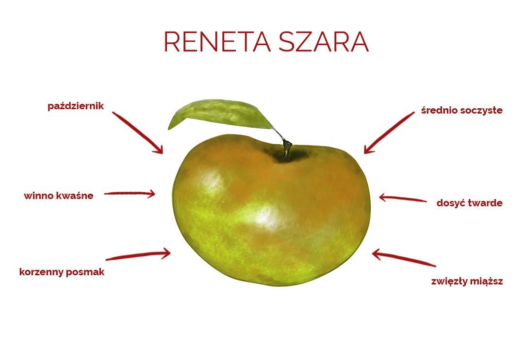 reneta-szara