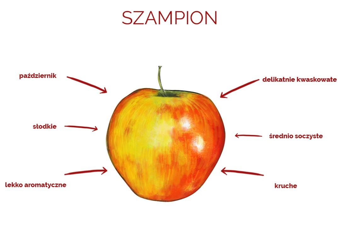 szampion